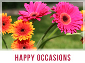 Happy Occasions Flower Arrangements