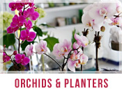 Orchids & Planter Flower Arrangements