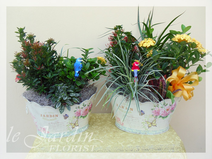 Planters dish gardens by le jardin florist for Arrangement jardin