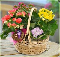 Deluxe European Garden Basket Plants - Flowers, Florist Flower