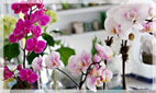 Orchid Flower Arrangements